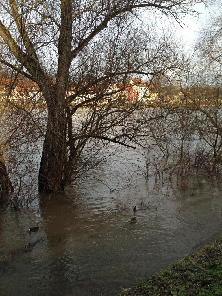 donauhochwasser_2012-12-24